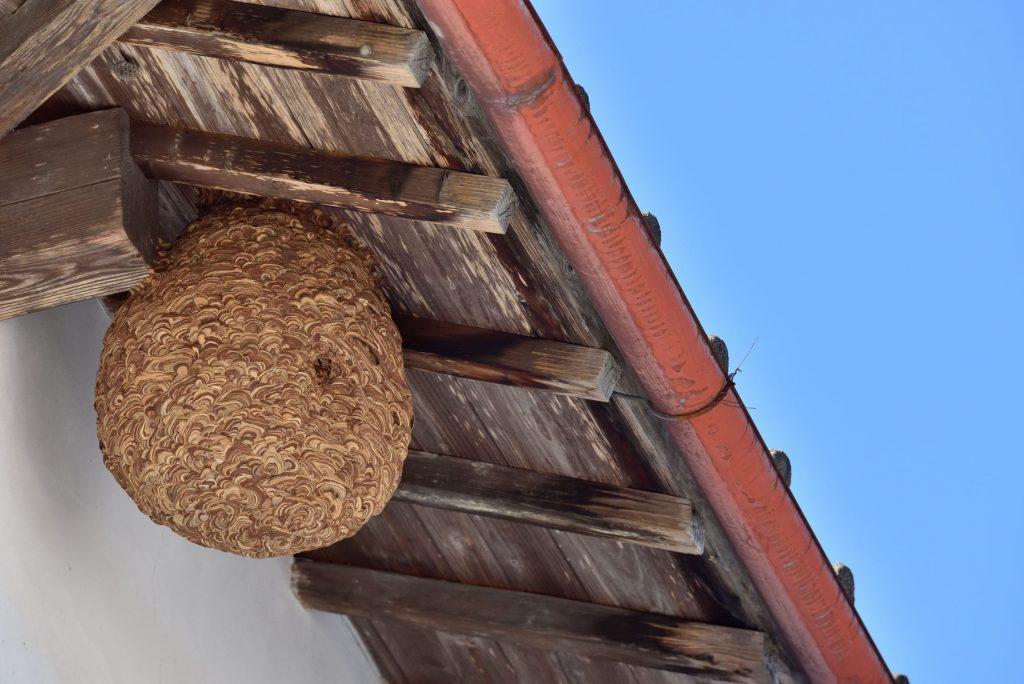 Détruire un nid de frelons ou un nid de guêpes - Multis 36