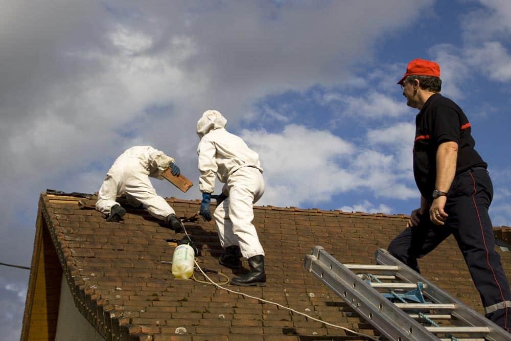 Intervention frelons asiatique sur un toit (nid primaire) - Multis 36