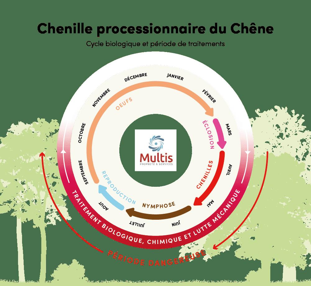 Traitement des chenilles processionnaires du chêne - Cycle de vie - Multis 36